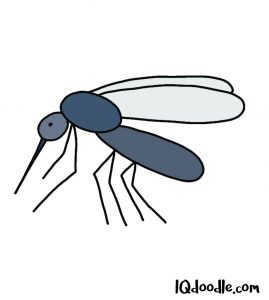 how to doodle a mosquito