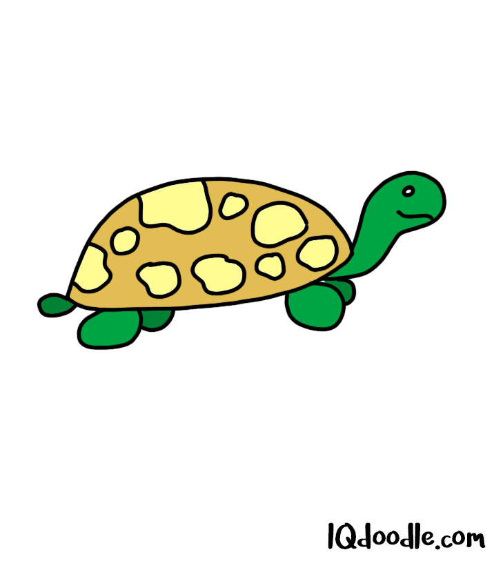 how to doodle a turtle